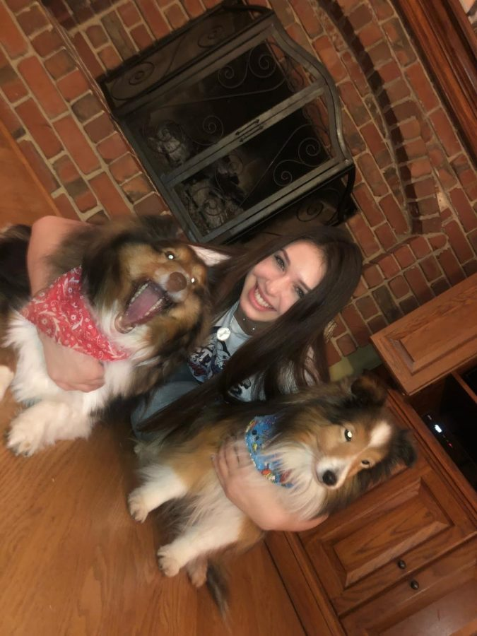 Kristen Stege is pictured with her two Shetland sheep dogs. The hotdog from the video fell on the dog to the left who has its mouth wide open. Photo courtesy of Kristen Stege.